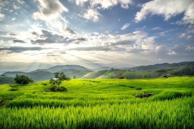 Terrassenpadievelden op berg in thailand