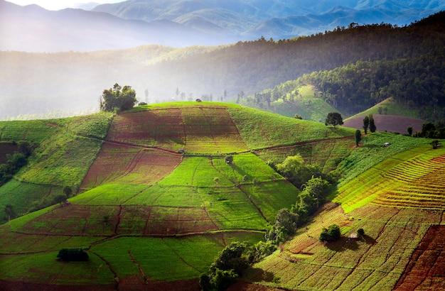 Terrasvormig padieveld in chiangmai thailand