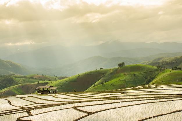 Terrasvormig padieveld in waterseizoen, chiang mai, thailand