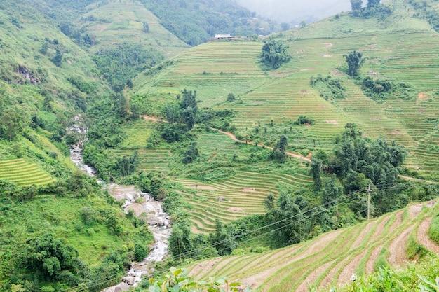 Terrasvormig padieveld na oogst en rivier op rainny seizoen op berg in sapa, vietnam