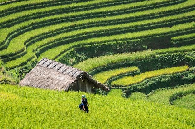 Terrasvormig padieveldlandschap dichtbij sapa in vietnam