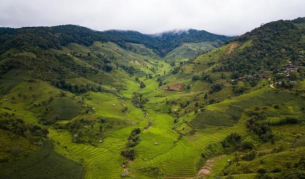 Terrasvormige padieveld bij mae cham chiangmai noord-thailand