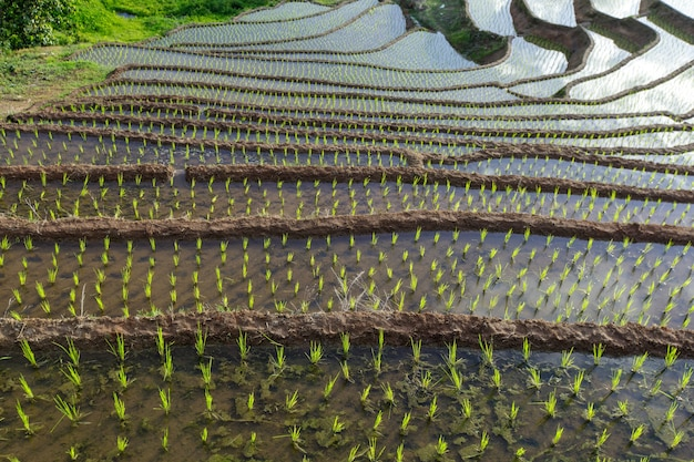 Terrasvormige padieveld in mae cham chiangmai noord-thailand