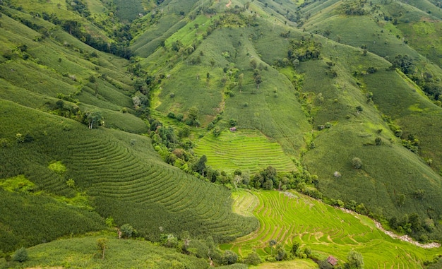 Terrasvormige padieveld in mae cham in thailand