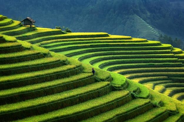 Terrasvormige rijstaanplanting in mu cang chai, vietnam. aanplanting van de landschaps de terrasvormige rijst in vietnam. mu cang chai-rijstaanplanting strekt zich uit over berghellingen in vietnam. vietnam plantage landschap.