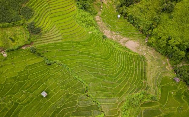 Terrasvormige rijstveld nan sapan noord-thailand