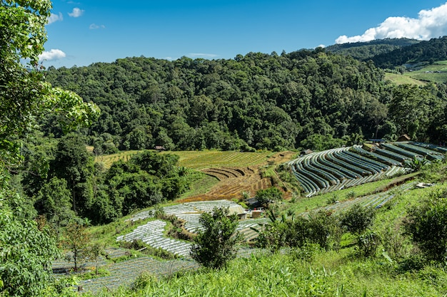 Terrasvormige velden in een vallei midden in de jungle
