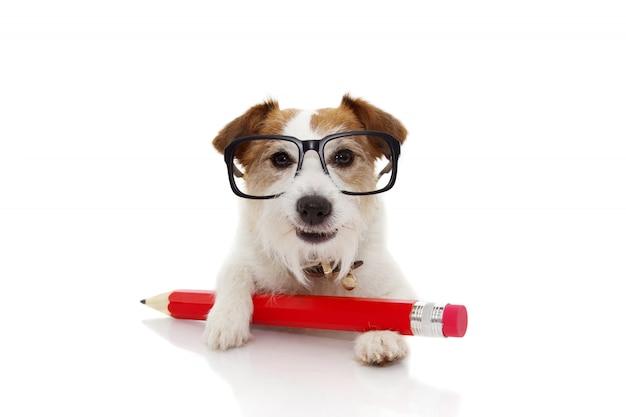 Terug naar school concept. grappige hond met een rode bril van potloodang.