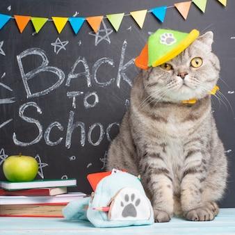 Terug naar school, een kat in een pet en met een rugzak op de achtergrond van het schoolbord en schoolaccessoires
