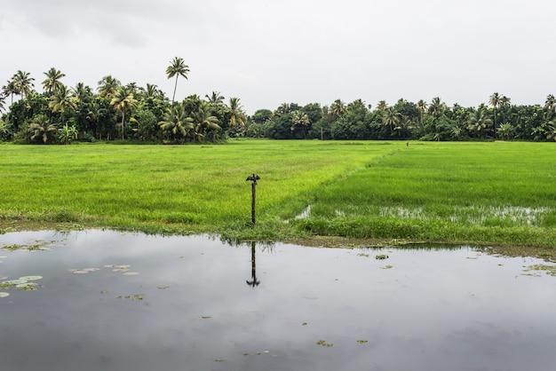 Terug wateren kerala india rivier