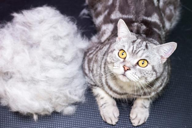 Tevreden kat in een schoonheidssalon.