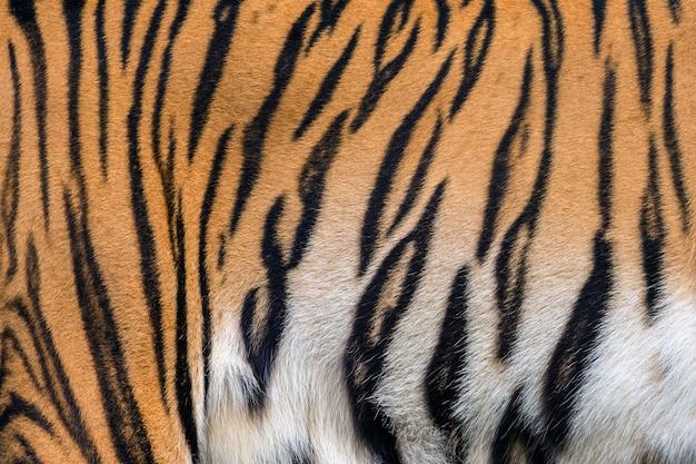 Texturen en huiden van tijger.