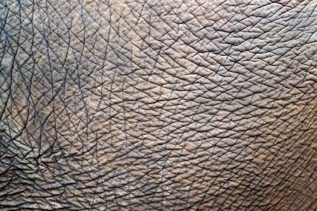 Texturen en patronen van aziatische olifanten voor achtergrond.