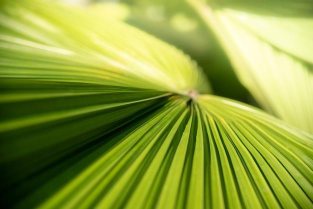 Texturen oppervlaktepatroon ontwerp levendige frisse helder van groene bladeren van palmbomen backgroun
