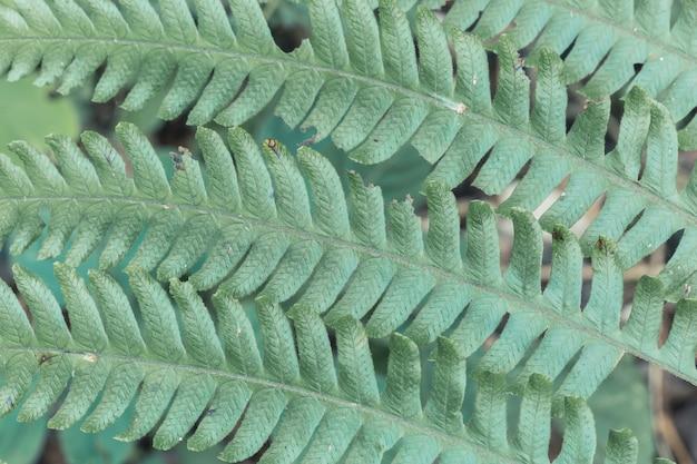 Texturen van wilde varenbladeren in de jungle.