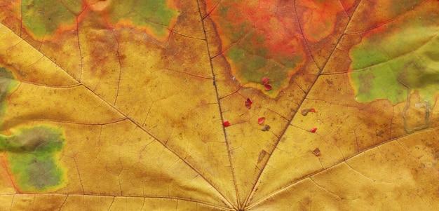 Textuur achtergrond de herfstblad. fall loof textuur