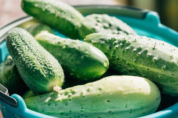 Textuur achtergrond van groene verse komkommers concept