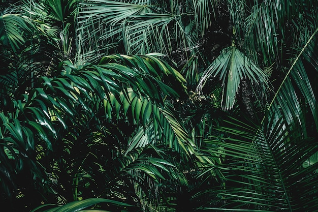 Textuur en achtergrond van tropische planten