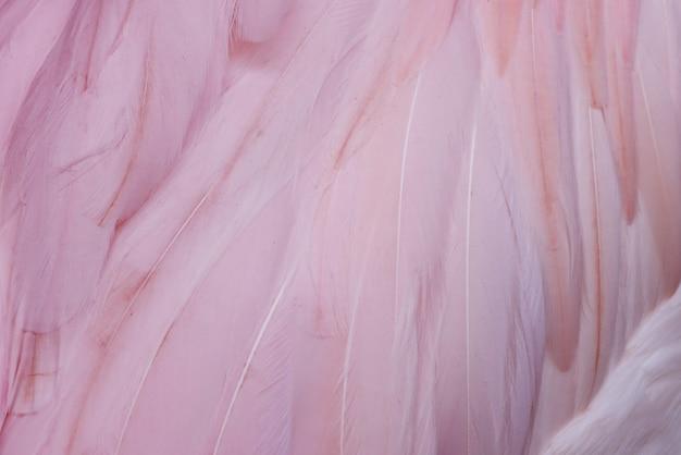 Textuur flamingo veer abstracte achtergrond