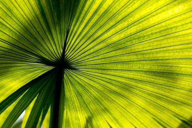 Textuur groen palmblad en schaduw, abstracte achtergrond