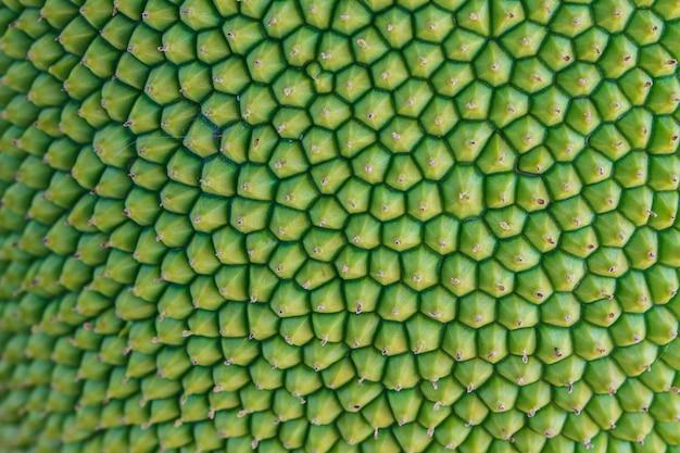Textuur jackfruit schil hebben doorn