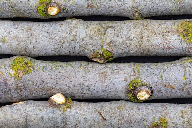Textuur met vijgen en mos takken (verzameling van plantaardige en natuurlijke vezels). voorgrond.