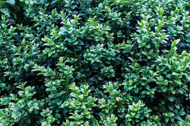 Textuur met weelderige groene glanzende gebladerteachtergrond