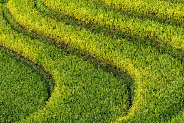 Textuur rijst terras achtergrond
