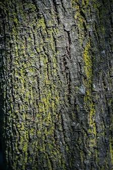 Textuur van boomschors met mos