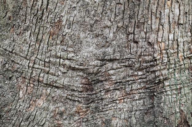 Textuur van boomschors