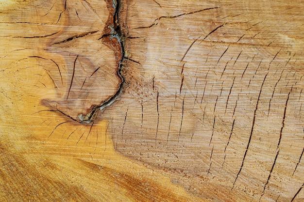 Textuur van boomstronk. dwarsdoorsnede van de boom. achtergrond.