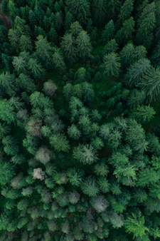 Textuur van bos uitzicht van bovenaf, luchtfoto bovenaanzicht bos, panoramische foto over de toppen van dennenbos