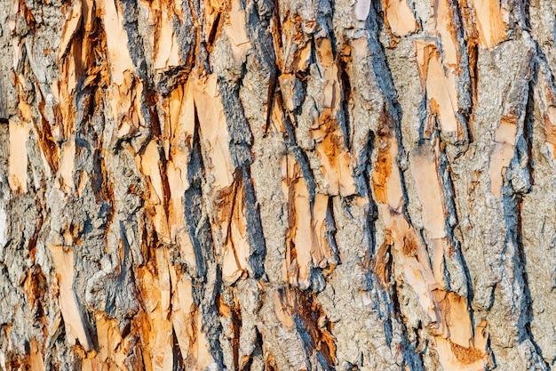 Textuur van de close-up van de boomschors. natuurlijke houten achtergrond