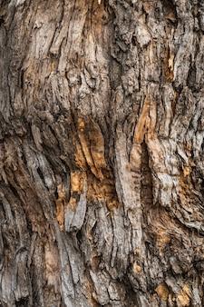 Textuur van de schors van een styphnolobium japonicum, algemeen bekend als pagodeboom