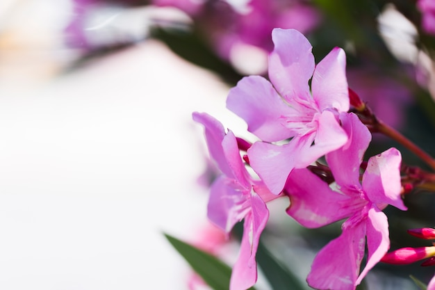 Textuur van dichte omhooggaande bloemen