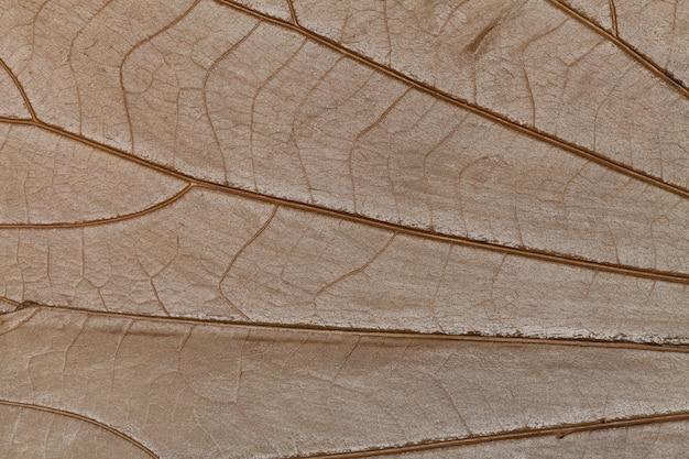Textuur van droog bladerenclose-up. achtergrond