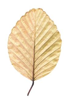 Textuur van droog bruin blad dat op wit wordt geïsoleerd