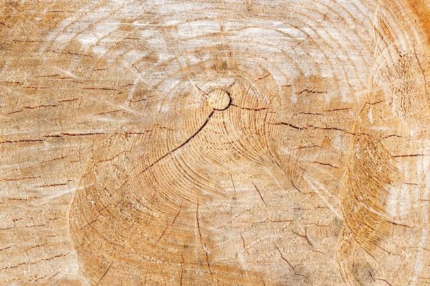 Textuur van dwarsdoorsnede oude boomstam