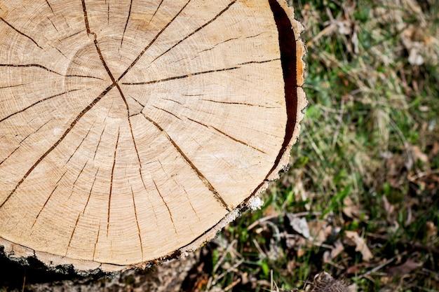 Textuur van dwarsdoorsnede van logboekdek over gras. het patroon van de boom met scheuren