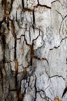 Textuur van een close-up van de boomboomstam