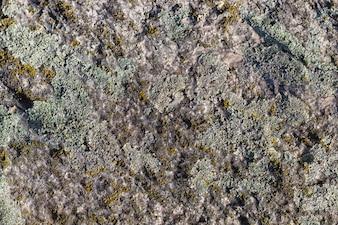 Textuur van een kei met mos