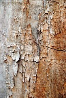 Textuur van gebarsten hout