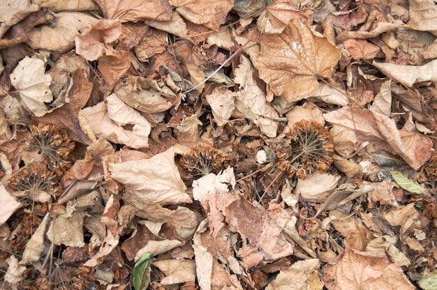 Textuur van gedroogde bladeren en gedroogde herfstbloemen.