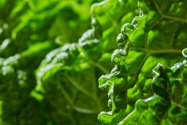 Textuur van groen blad van kool savooiekool