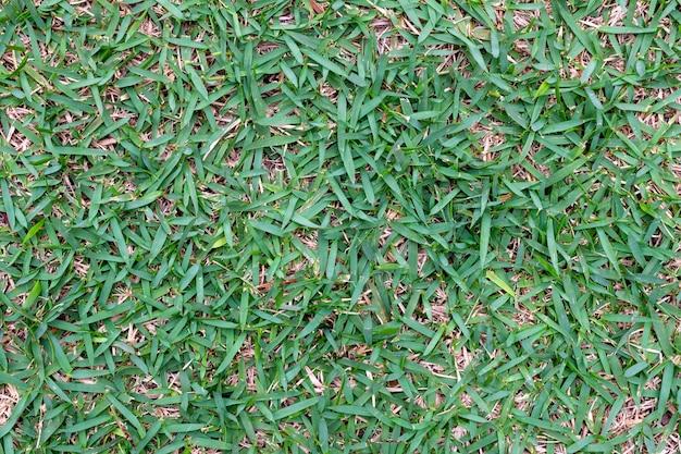 Textuur van groen gras geplant in de tuin.