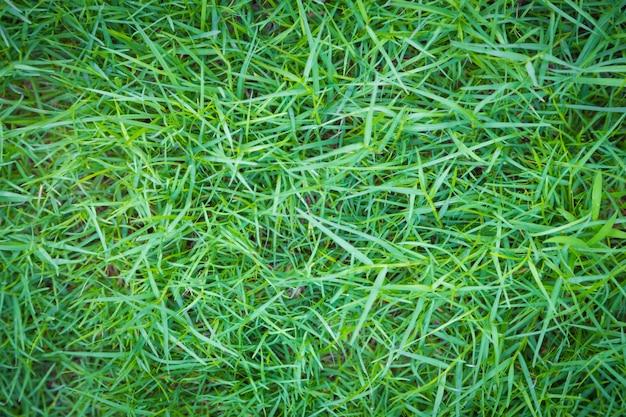 Textuur van groene gazon