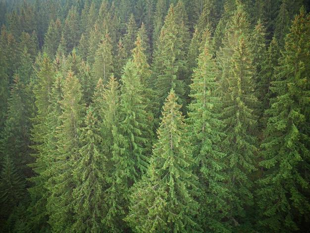 Textuur van groene sparren luchtfoto