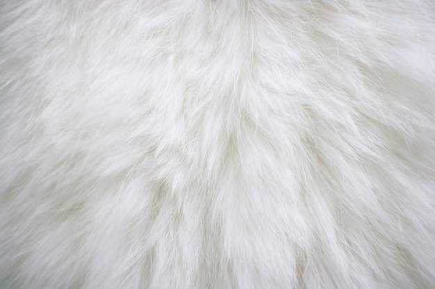 Textuur van natuurlijk langharig wit bont.