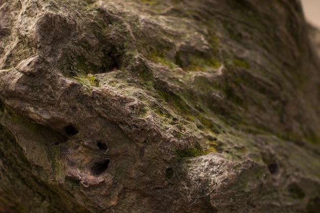 Textuur van oude boom met groen mos in het bos