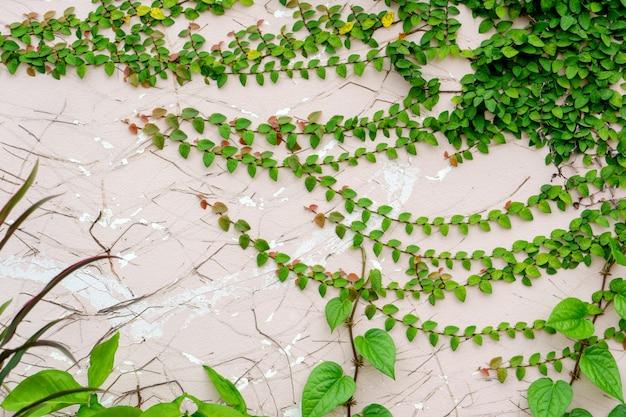 Textuur van oude grungemuur met vegetatie